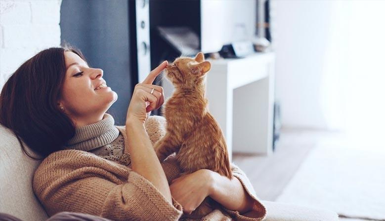 como adoptar un gatito